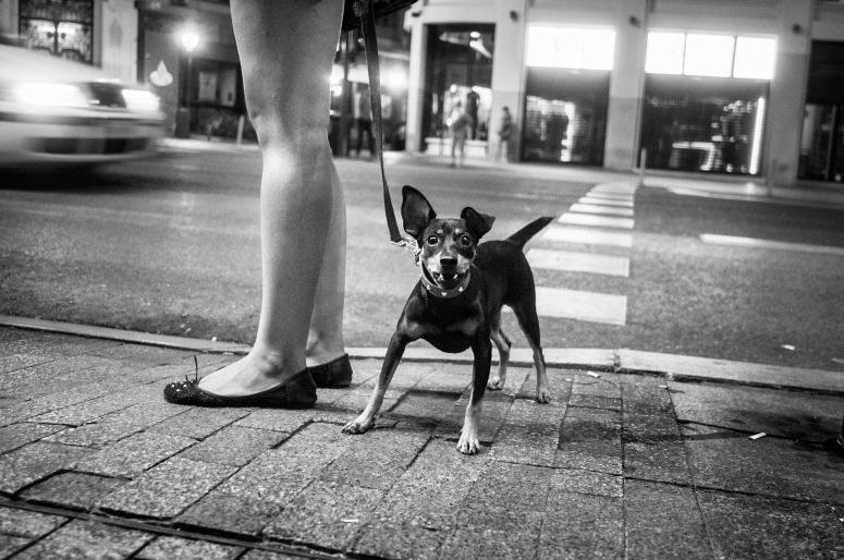 Chica y perro Gran Vía B&N